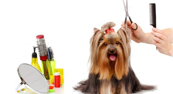 How To Market Pet Products Effectively?