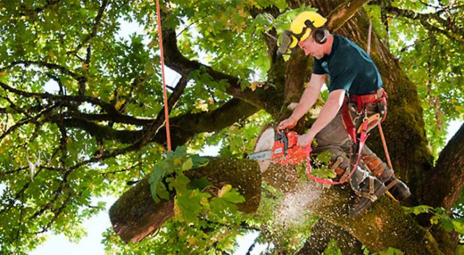 Acquire Professional Tree Services to Give Your Garden Aesthetic Appeal
