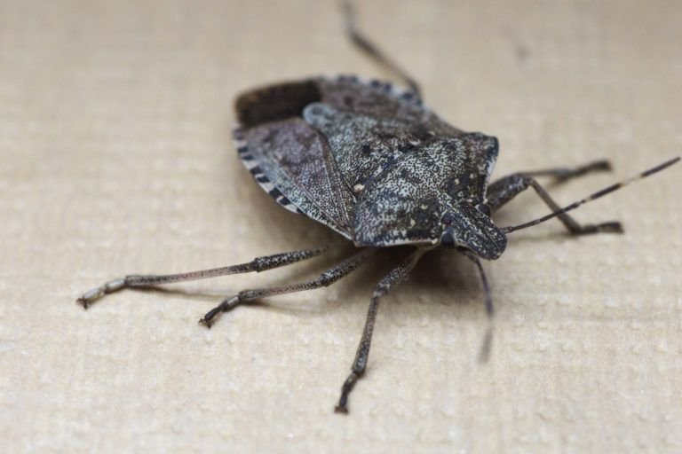 Five Ways To Exterminate Sting Bugs